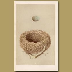 Redwing Nest