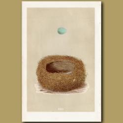 Stonechat Nest