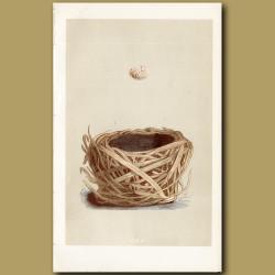 Savi's Warbler Nest
