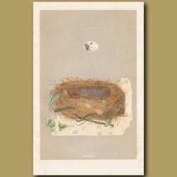 Orphean Warbler Nest