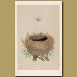 Whitethroat Nest