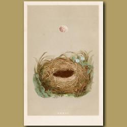 Wood Warbler Nest