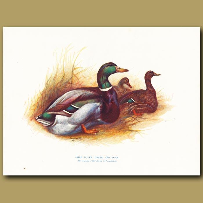 Antique print. Prize Rouen Drake and Duck