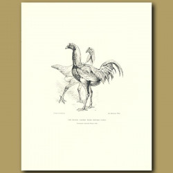 The Messrs. Bakers' Prize Chinese Fowls