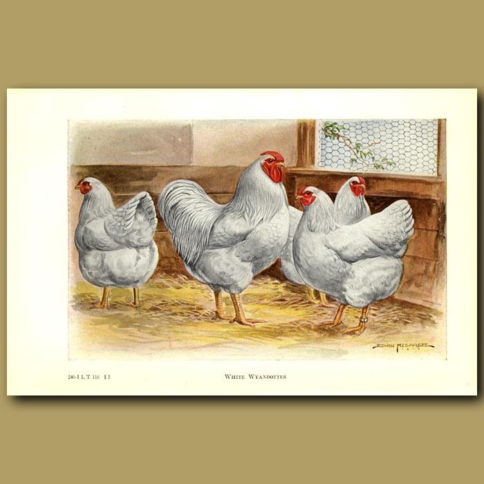Antique print. White Wyandotte Chickens
