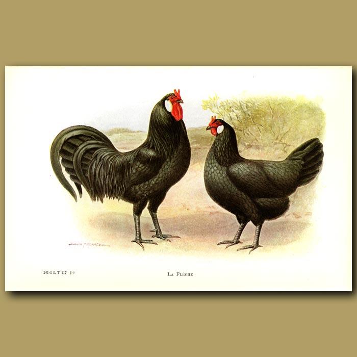 Antique print. La Fleche Chickens