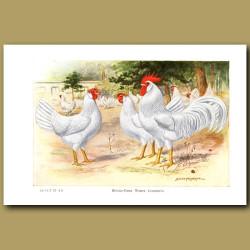 Single-Comb White Leghorn Chickens