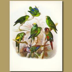 Parrots, Parrakeets and Conures