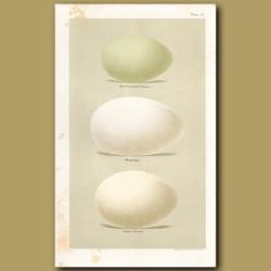 Goose And Flamingo Eggs