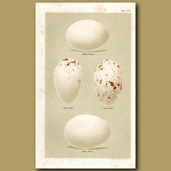 Stork And Spoonbill Eggs