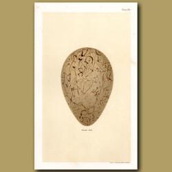 Great Auk Egg