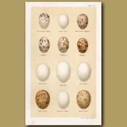 Nightjar And Dove Eggs