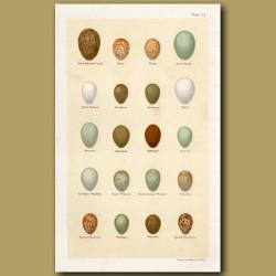 Redstart And Wheatear Eggs