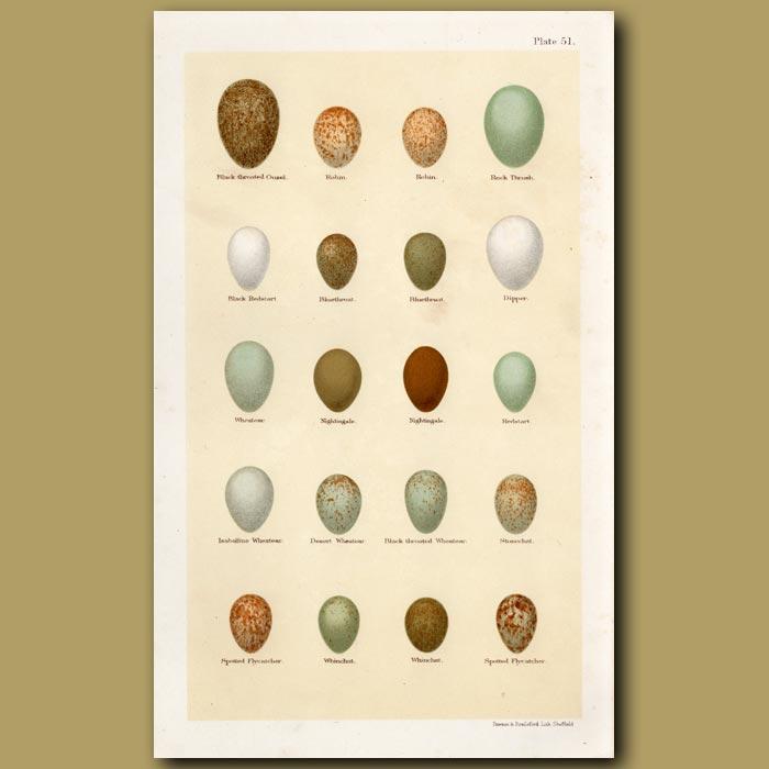 Antique print. Redstart And Wheatear Eggs