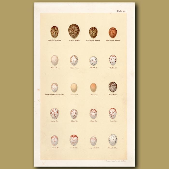 Antique print. Warbler And Wren Eggs