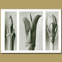 Cornus Brachypoda(12x), Cornus Pubescens(15x), Viburnum(8x)