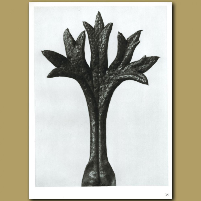 Antique print. Saxifraga wilkommniana (18x)