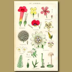 The Classes of Linnaeus