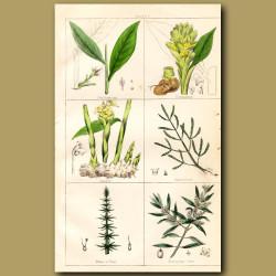 Cardamom, Turmeric, Ginger