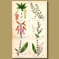 Barberry, Purslane, Aloe