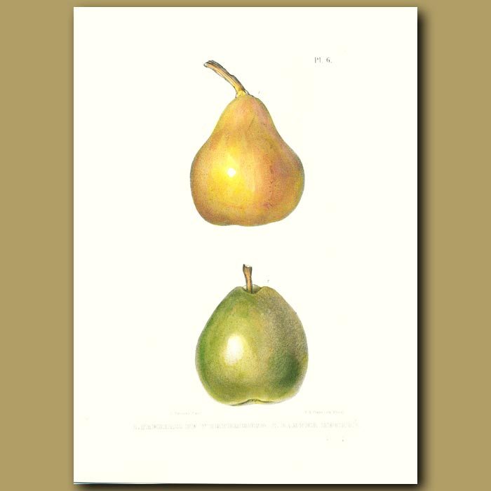 Antique print. Pears:Frederic de Wurtemburg and Easter Beurre