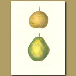 Pears:Autumn Bergamot and Swans Orange