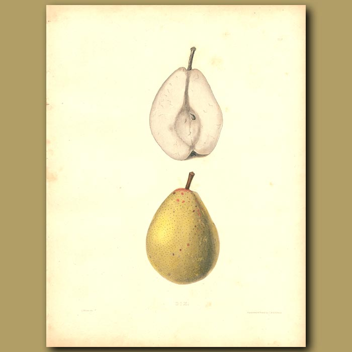 Antique print. Pears:Dix