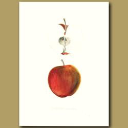 Apples:Summer Queen