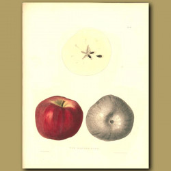 Apples:The Winter King