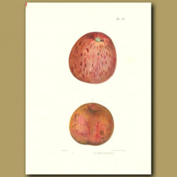 Apples:Marks' New Strawberry and Sheepnose