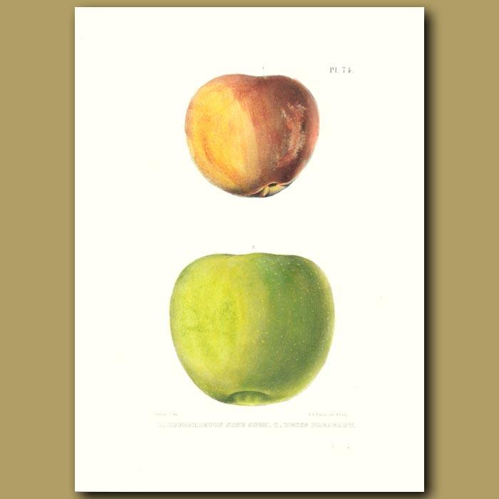 Antique print. Apples:Hubbardston None such and Pecks Pleasant