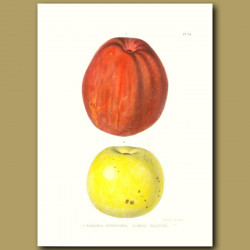 Apples:Virginia Sweeting and Fall Harvey