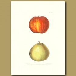 Apples:Fall Strawberry and Gil o Gil