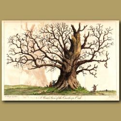 The Cowthorpe Oak Tree