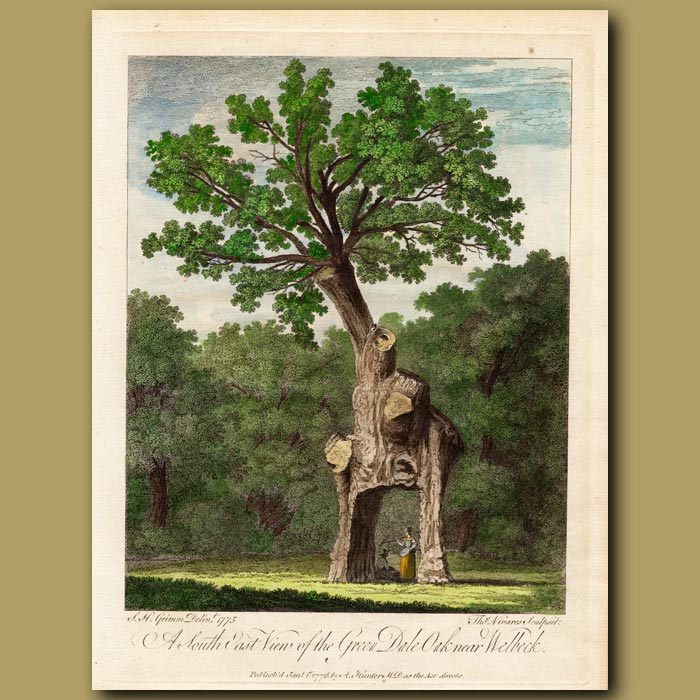 Antique print. A South East View of the Green Dale Oak near Welbeck