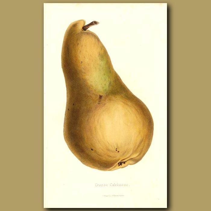 Antique print. Grosse Calebasse Pear