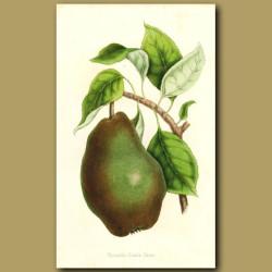 Nouvelle Fulvie Pear