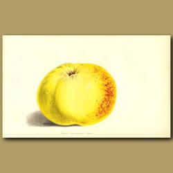Apple: Winter Hawthornden
