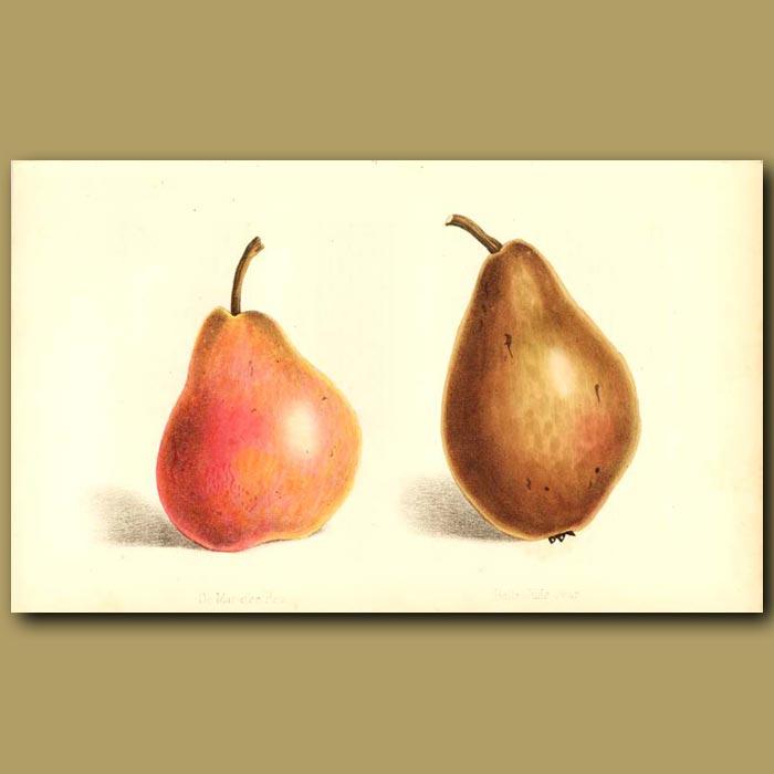 Antique print. De Maraise and Belle Julie Pears