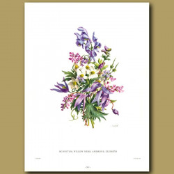 Aconitum, Willow Herb, Anemone, Clematis