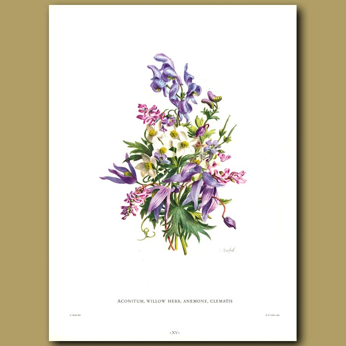 Antique print. Aconitum, Willow Herb, Anemone, Clematis