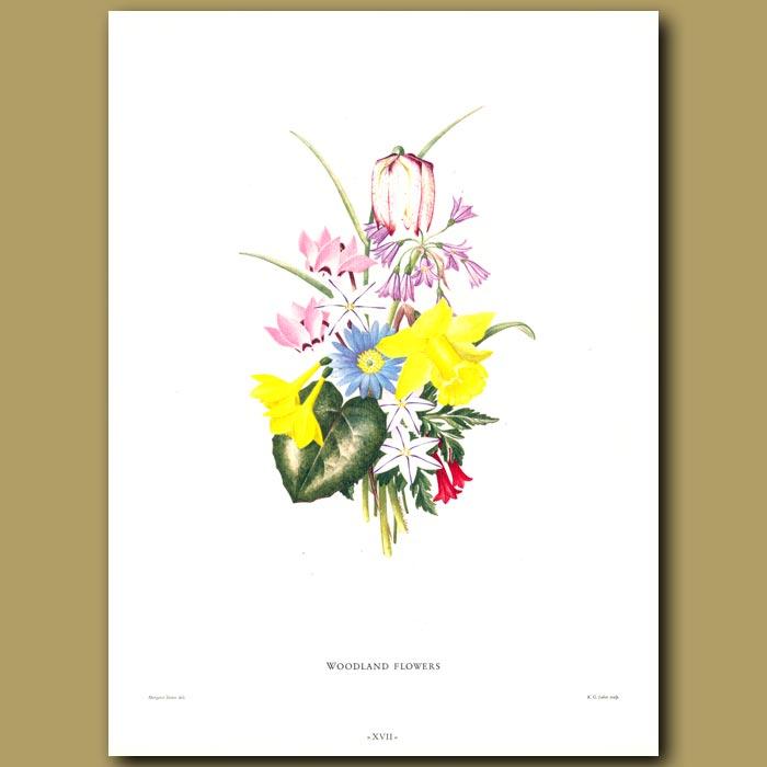 Antique print. Woodland Flowers