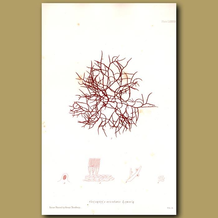 Antique print. Creephorn