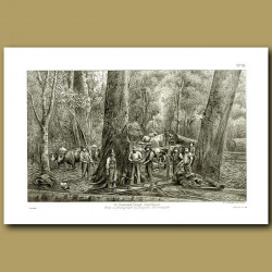 Loggers In Seaward Forest Southland in 1886 -