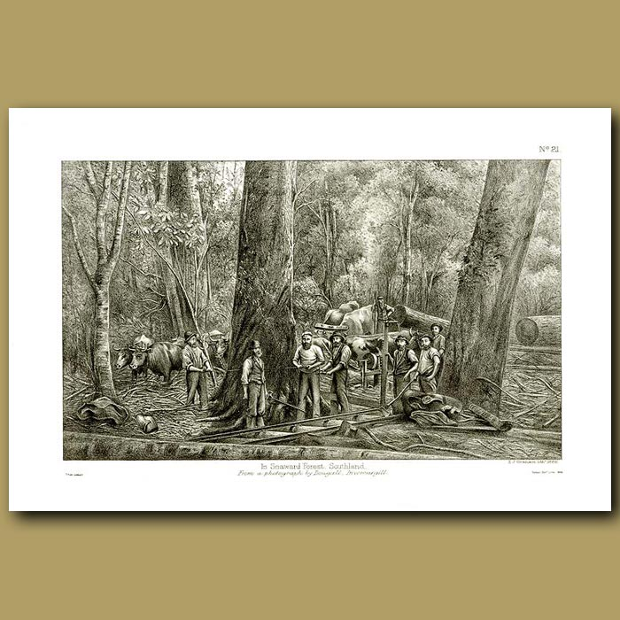 Antique print. Loggers In Seaward Forest Southland in 1886 -