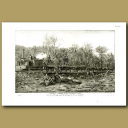 Saw-mill Tramway in Seaward Forest in 1886 -