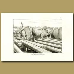 Kauri logs on the skids