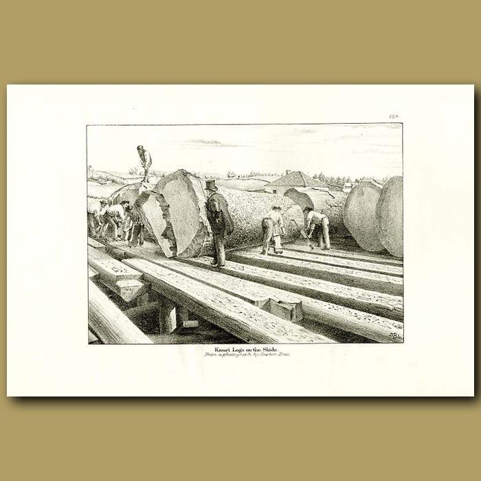 Antique print. Kauri logs on the skids