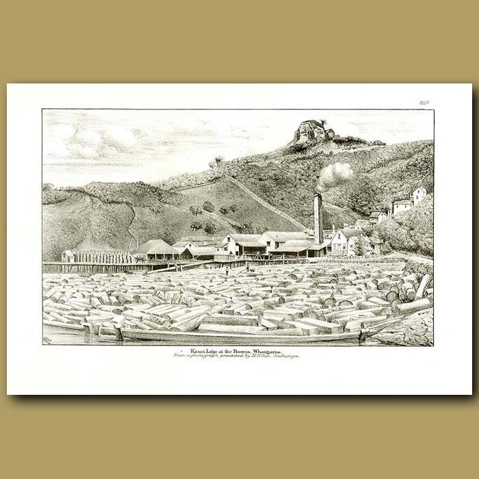 Antique print. Kauri logs at the Booms, Whangaroa