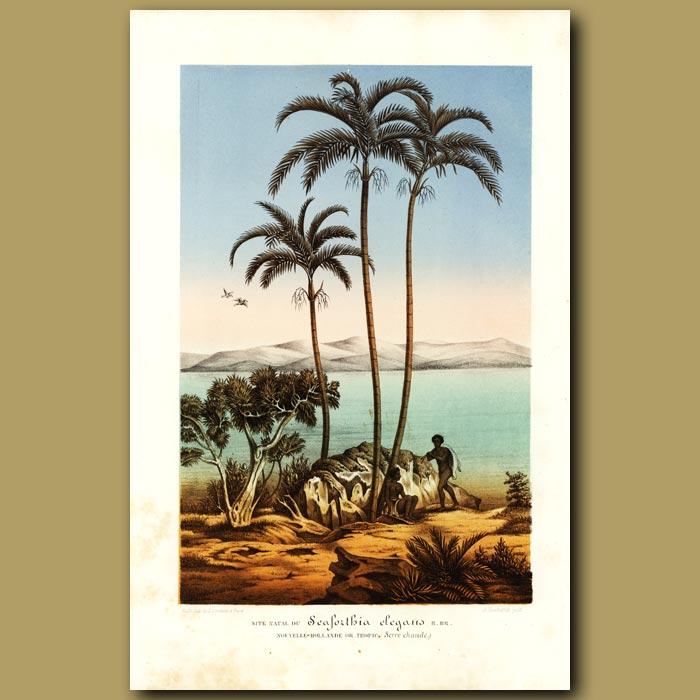 Antique print. Tropical Coastline